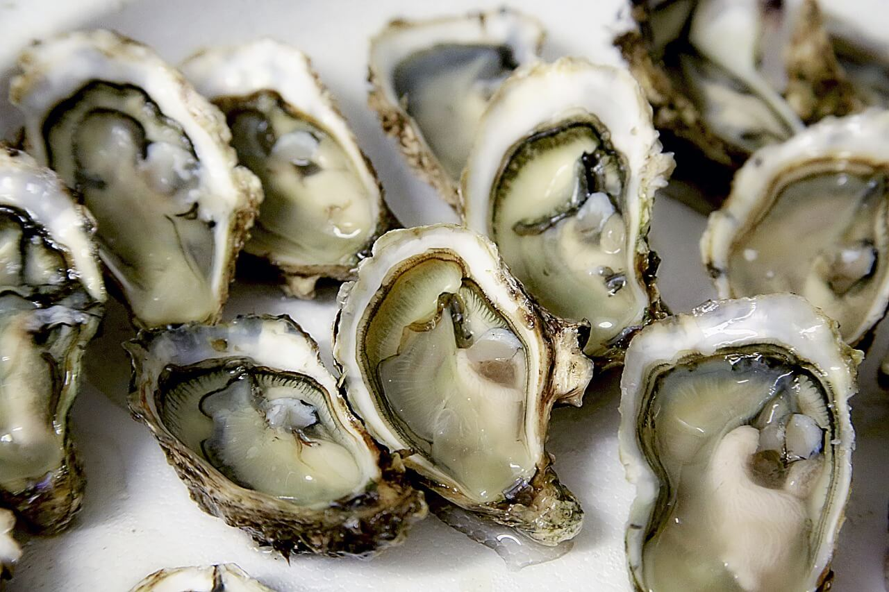 oyster, shell, seafood